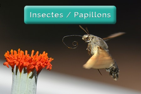 Insectes & Papillons & Libellules