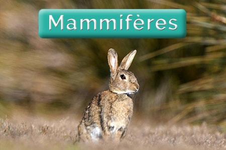 Image bouton salagou - mammifères